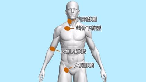 穿刺部位 | 中心静脈カテーテル(中心静脈栄養法)【1】