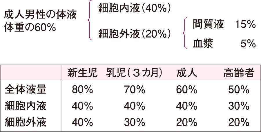 新生児、乳児、成人、高齢者の体液分布(体重の%で表した)