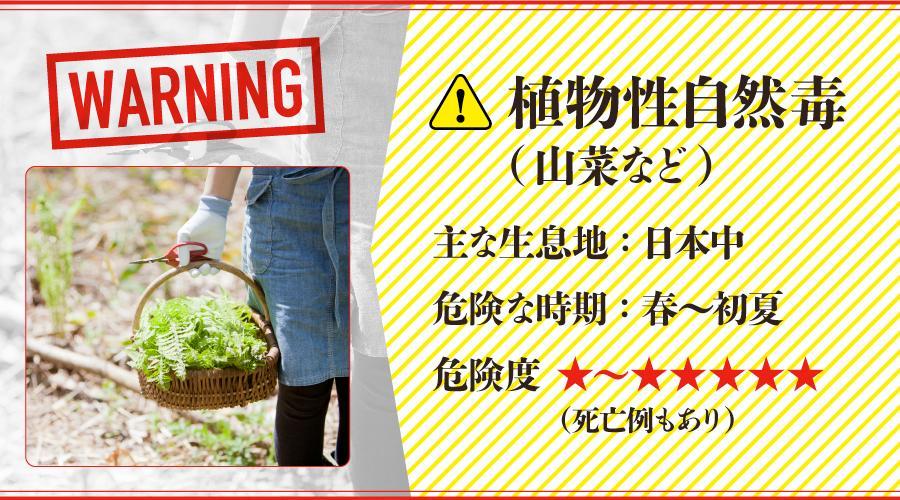 山菜_有毒植物