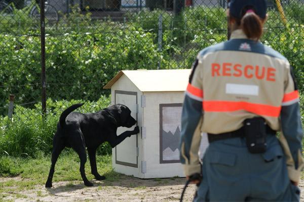 日本レスキュー協会 災害救助犬 J BOX訓練
