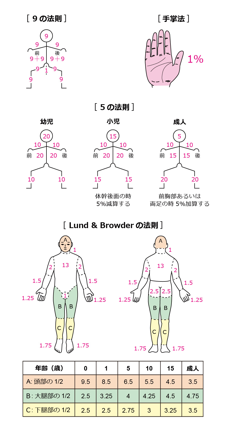 9の法則_5の法則_手掌法_Lund & Browderの法則_熱傷面積_%BSA_Body Surface Area