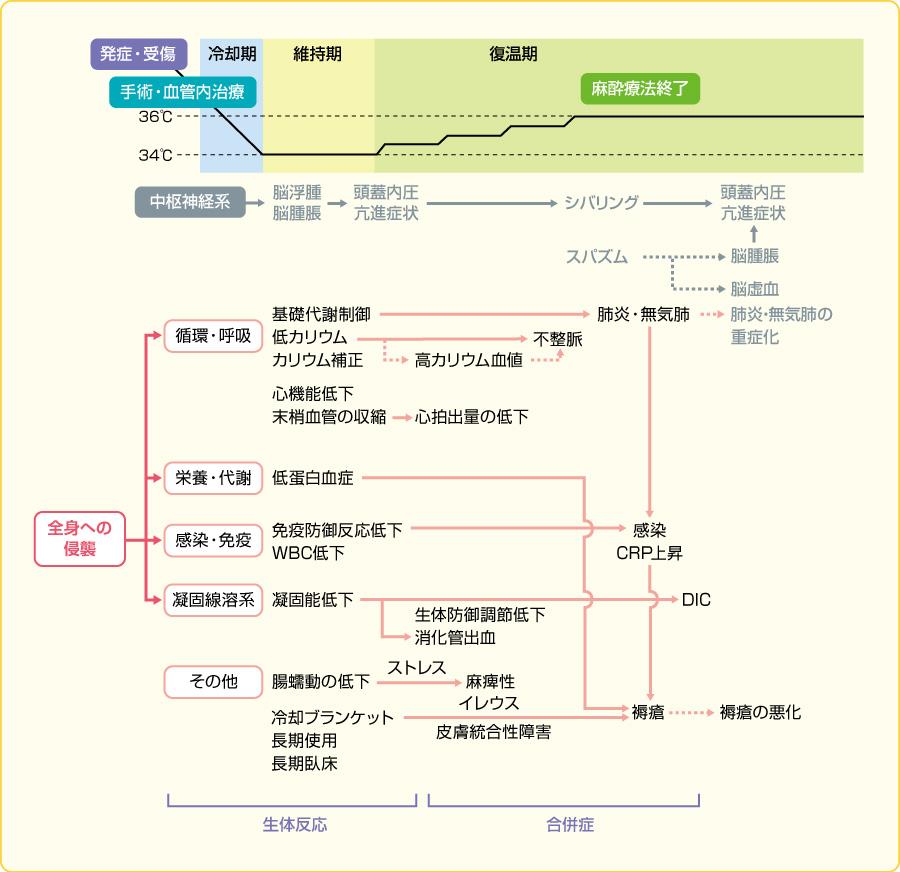 低体温療法に伴う生体反応と合併症