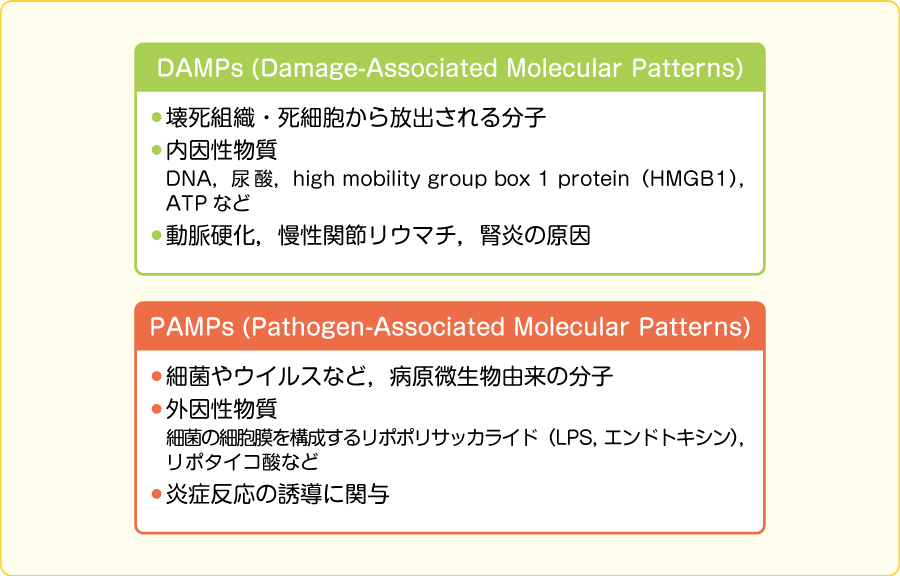 DAMPsとPAMPs