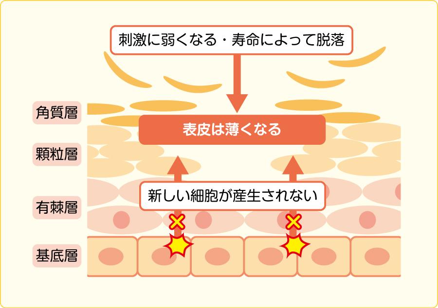 放射線性皮膚炎の発生メカニズム