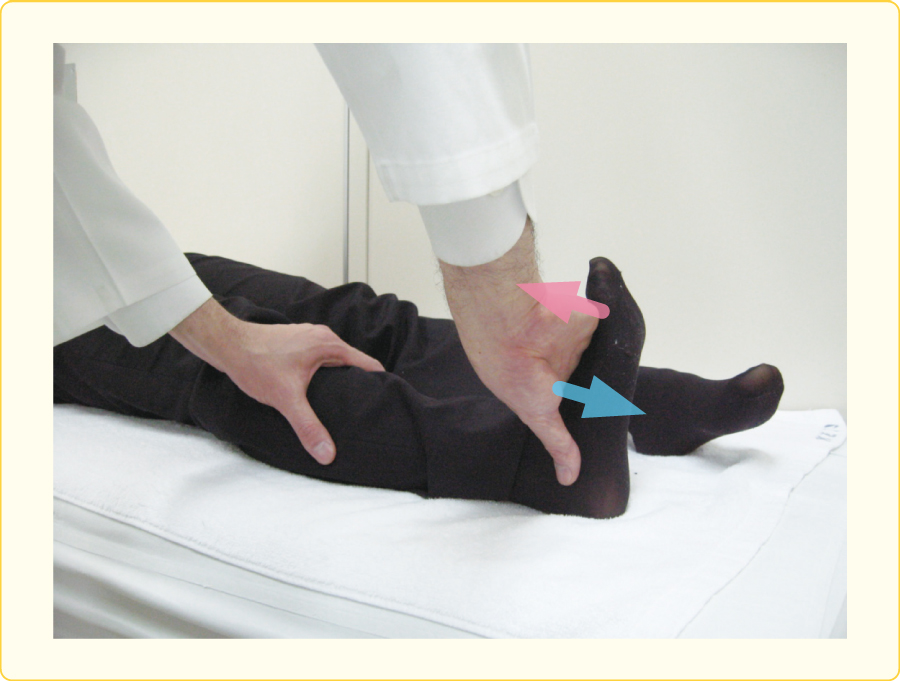 前脛骨筋の診察