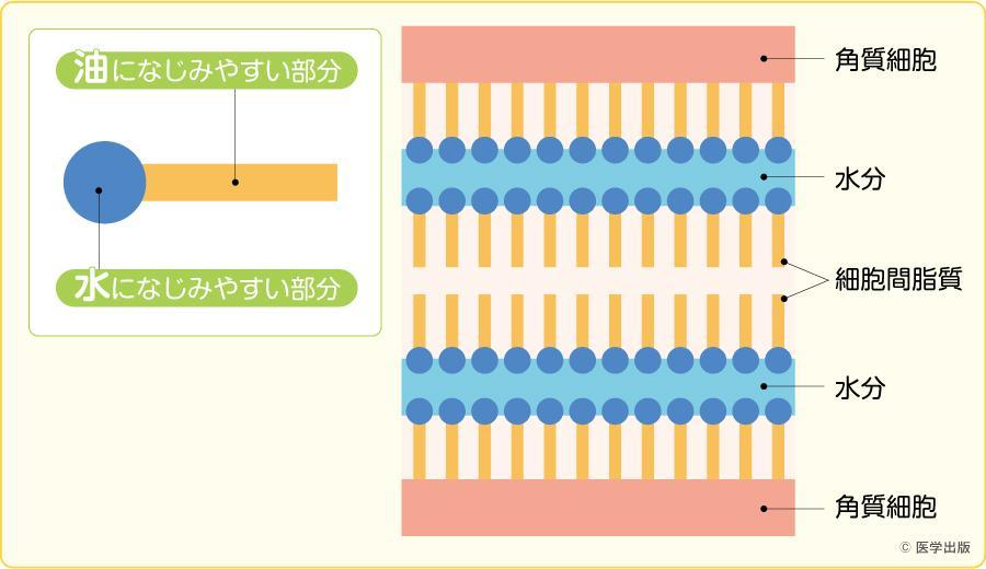 細胞間脂質(セラミド)
