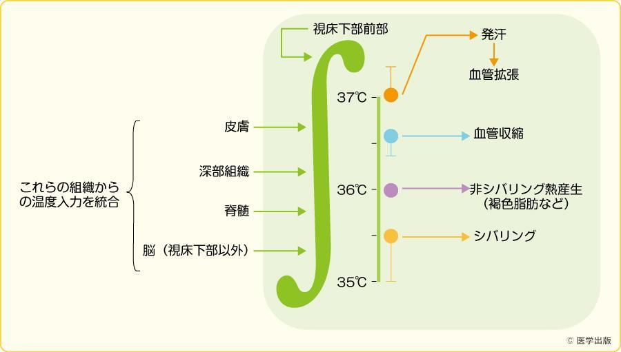視床下部による体温調節(文献1)より引用)