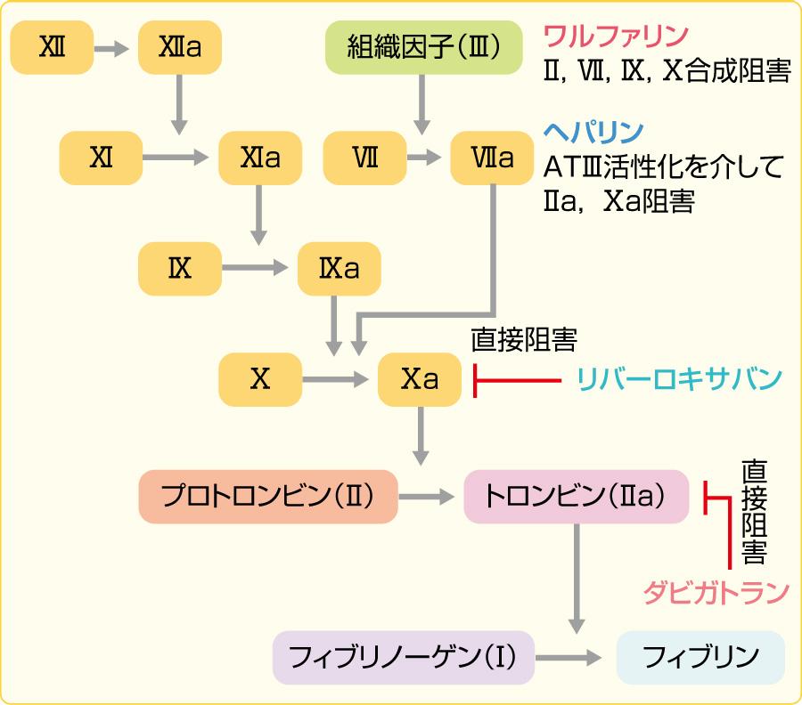凝固因子カスケードと各抗凝固薬の作用点
