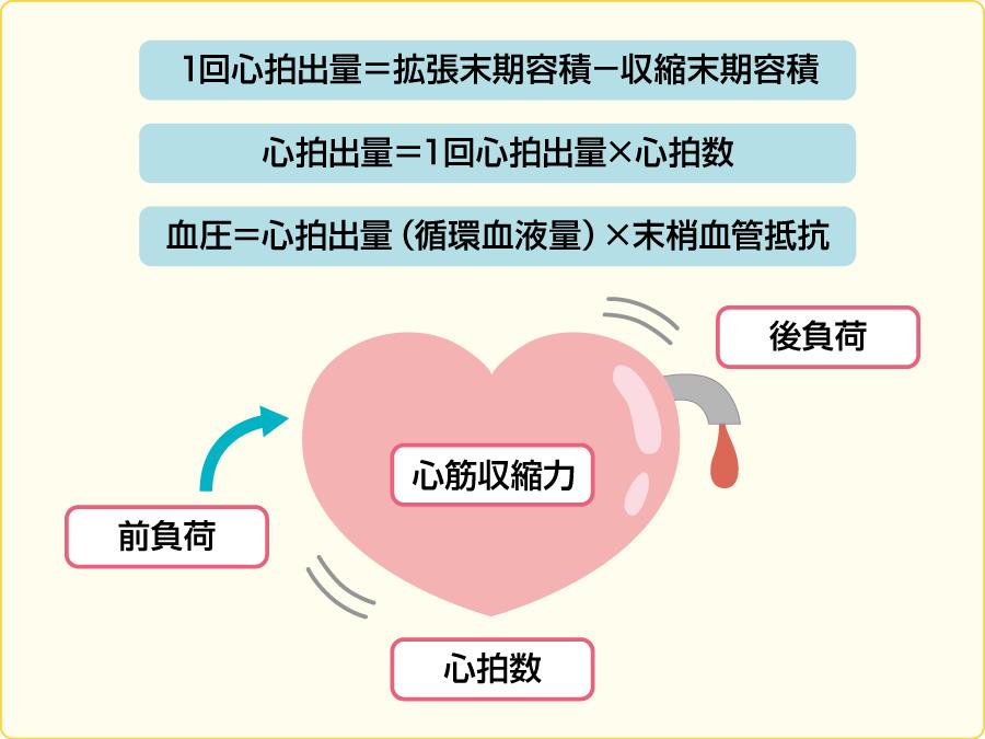 心臓のポンプ機能