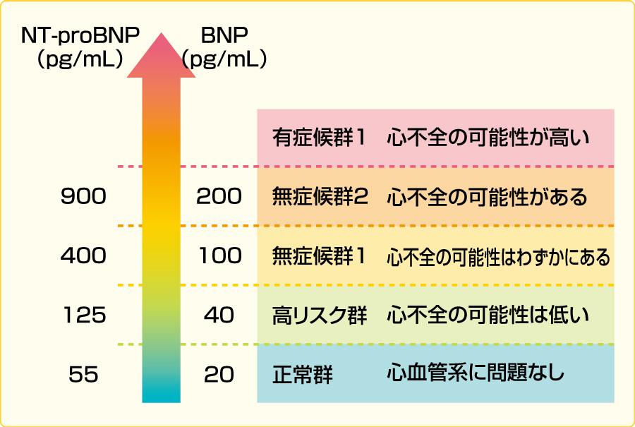 心不全診断におけるBNP・NT-proBNP値カットオフ値(文献5より引用)