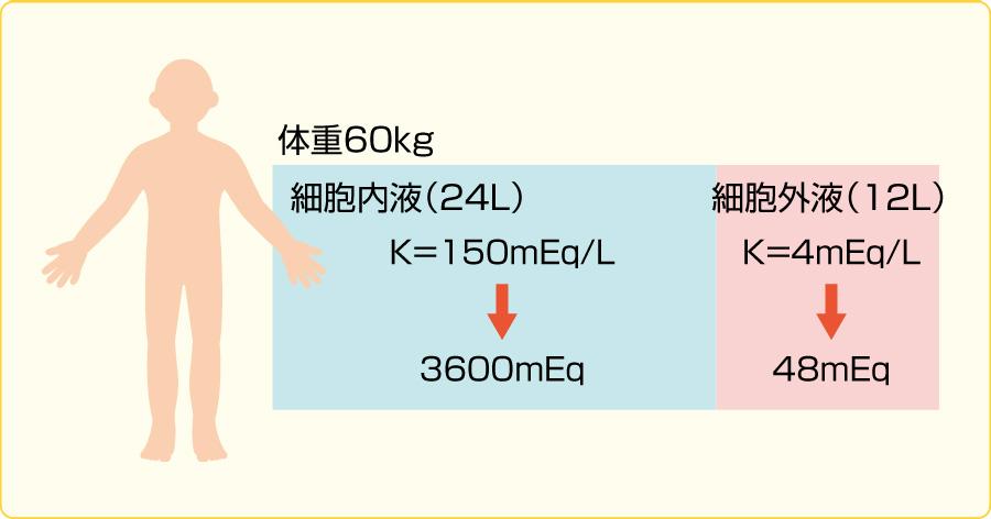 カリウムの分布