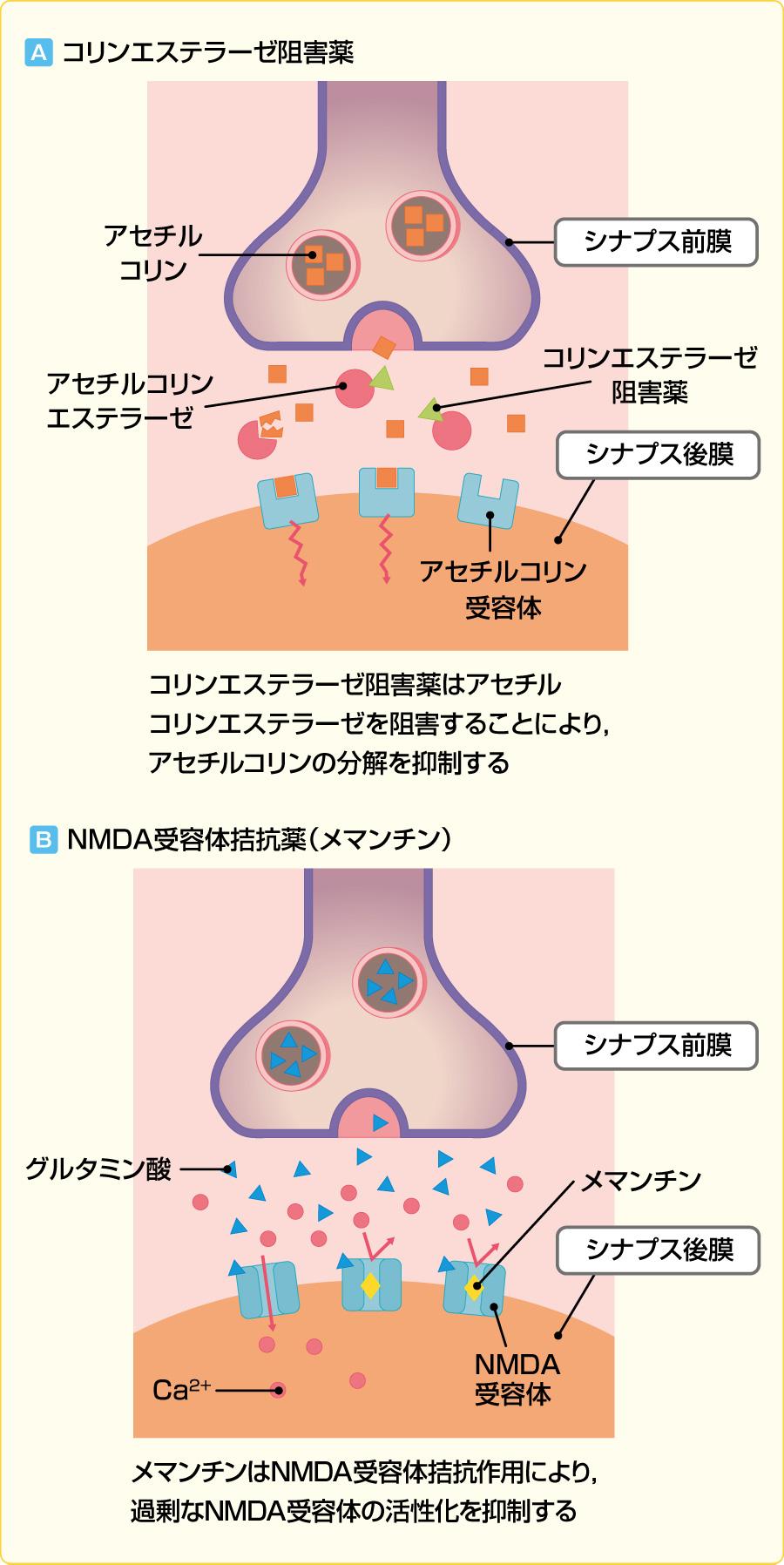 抗認知症薬の作用機序