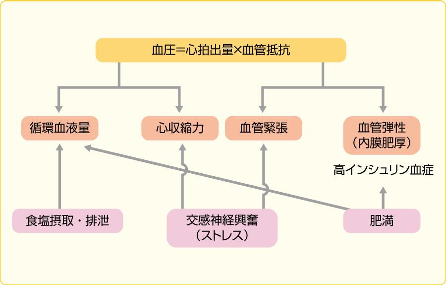 血圧を規定する基本要因(文献10より引用改変)