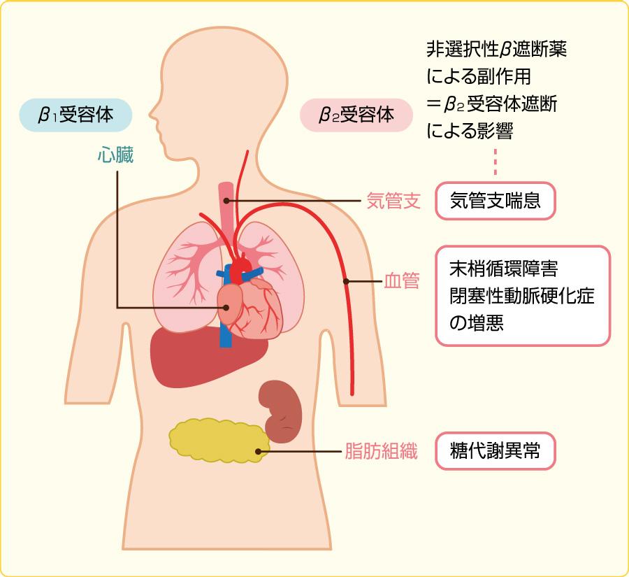 β受容体の分布と副作用
