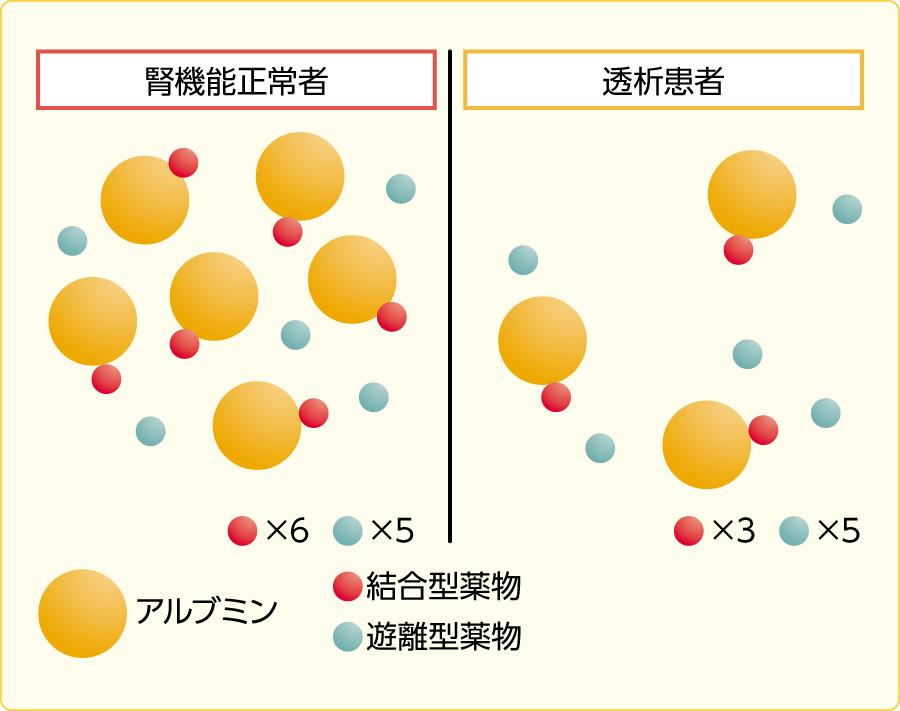 透析患者における薬物の蛋白結合の変化の模式図