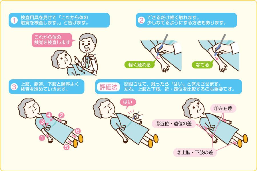 四肢・躯幹の触覚の検査