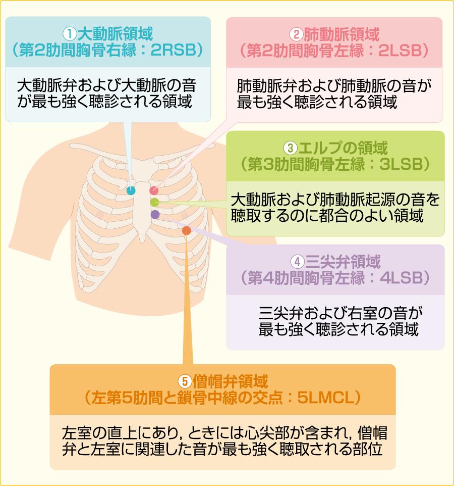 心音の聴診部位