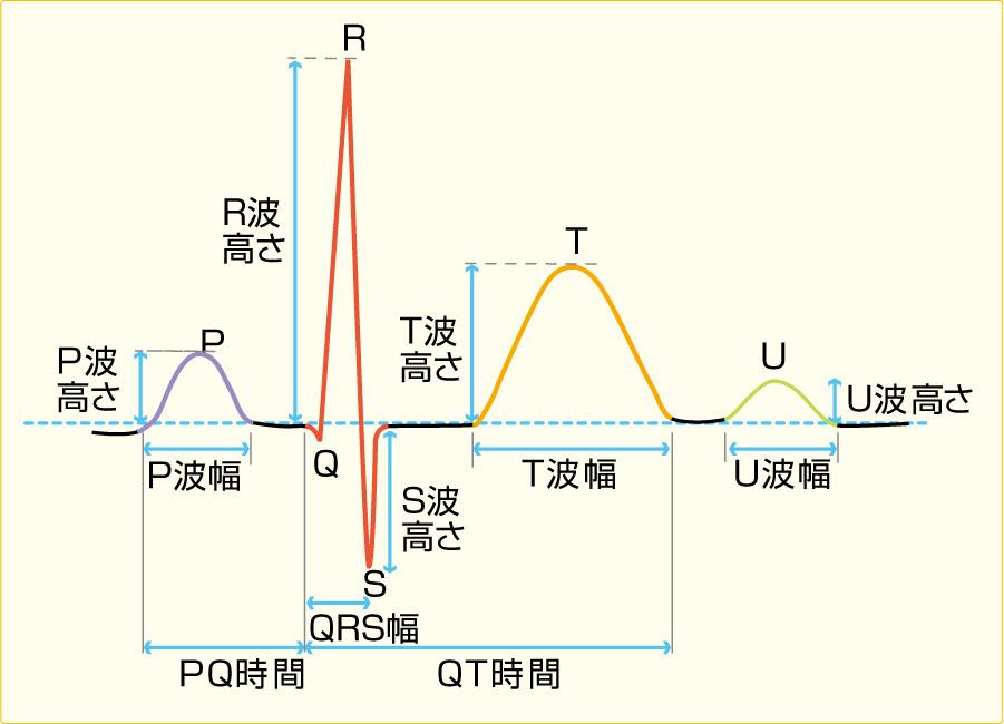 心電図の基本波形
