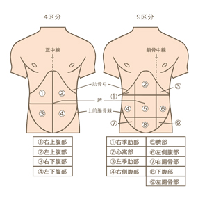 腹部の体表区分(4区分と9区分)のイラスト
