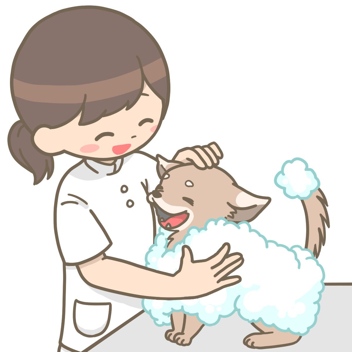 動物看護師が犬をシャンプーしているイラストフリー素材看護roo