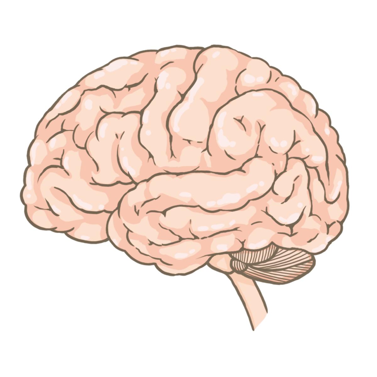 脳のイラストフリー素材看護rooカンゴルー