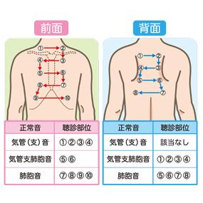 正常呼吸音の聴取部位と対応表のイラスト