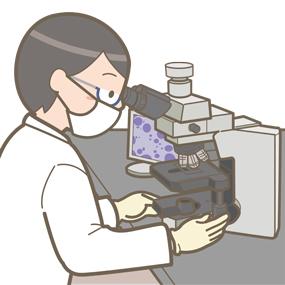 臨床検査技師がグラム染色をしているイラスト
