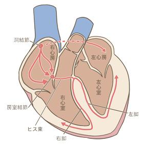 心臓(電気刺激)のイラスト