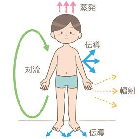 熱放散(蒸発・対流・伝導・輻射)の経路のイラスト