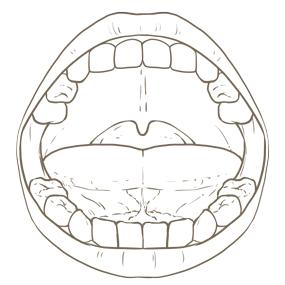 幼児の口腔内のイラスト※着色なし