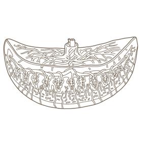 胎盤の構造 のイラスト ※着色なし