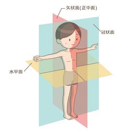 身体の方向をあらわす3つの基準面(矢状面(正中面)、冠状面、水平面)のイラスト