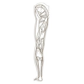 下肢全体(後面からみた深部)の筋肉のイラスト※着色なし