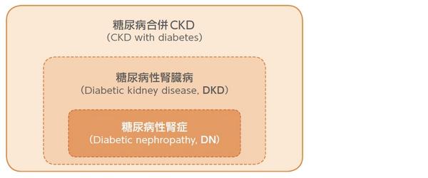 闘病病性腎臓病(DKD)の概念図