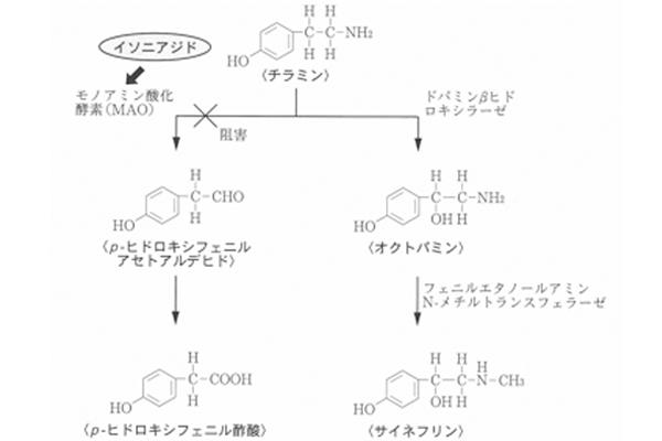 チーズなどに含まれるチラミンの代謝マップの一部とイソニアジドによる代謝阻害部位の図