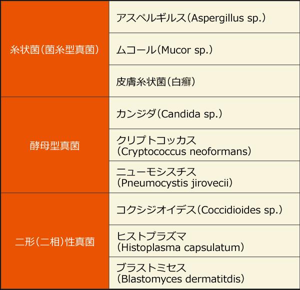 真菌の形態による分類と例