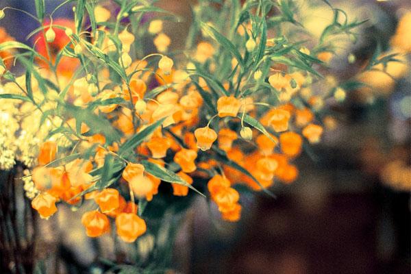 お見舞いの生花が持ち込み禁止?「緑膿菌」感染の危険|ナース知っ得ニュース20141001号|看護師専用Webマガジン【ステキナース研究所】