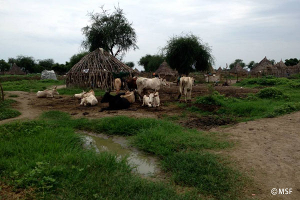 時間の概念は「牛」―国境なき医師団ナースコラム【南スーダン】