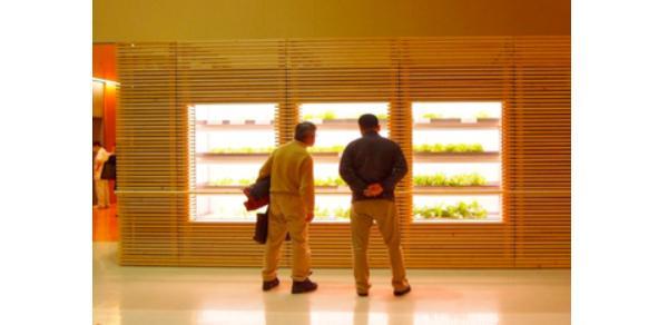 外来ロビーに設置された野菜工場(提供:長山氏)
