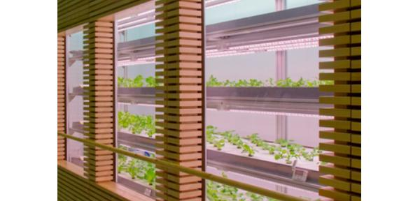外来ロビーに設置された野菜工場2(提供:長山氏)