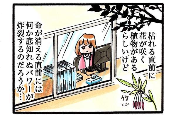 看護師、感慨にふける。「枯れる直前い花が咲く植物があるらしいけど、命が消える直前には、何か底知れぬパワーが炸裂するのだろうか…。