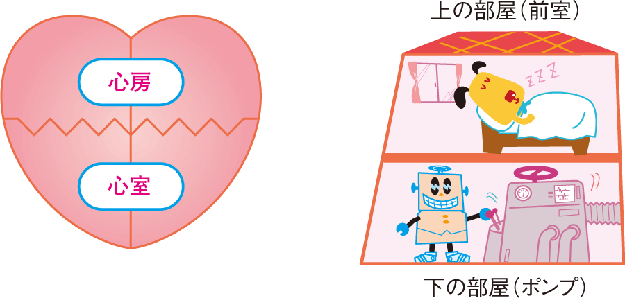 心房と心室