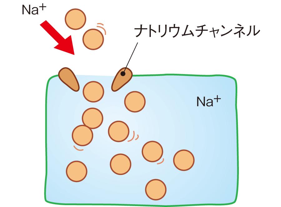 ナトリウムチャンネル