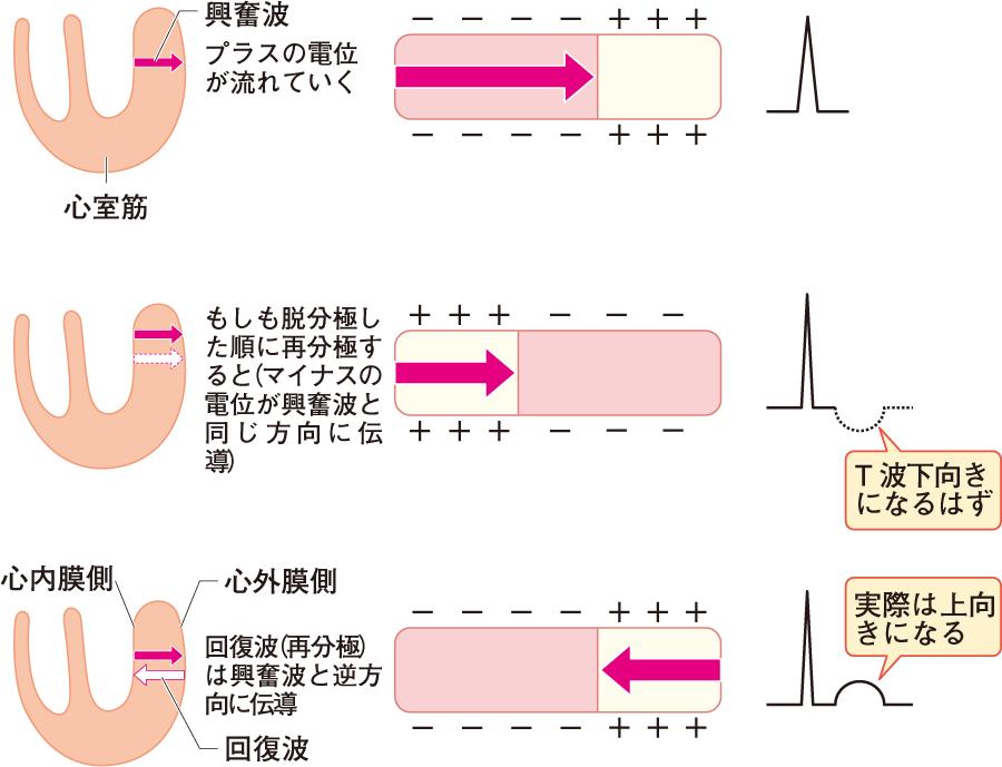 電位の流れと波形の形