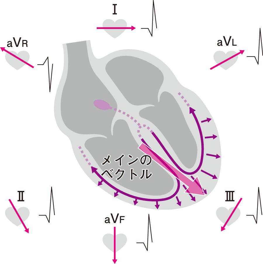 四肢誘導でのQRS波のメインベクトル