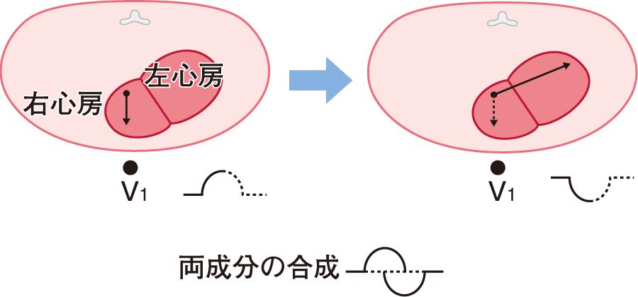 胸部誘導でのP波のベクトル