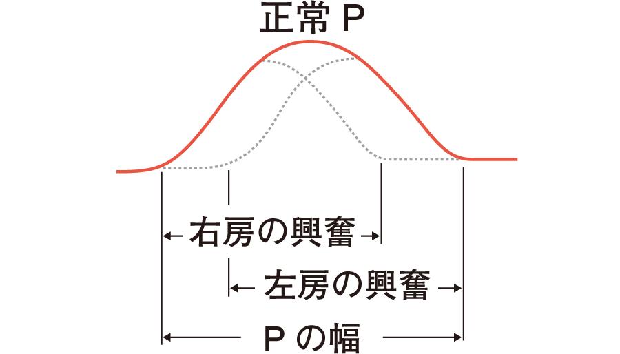 P波の構成