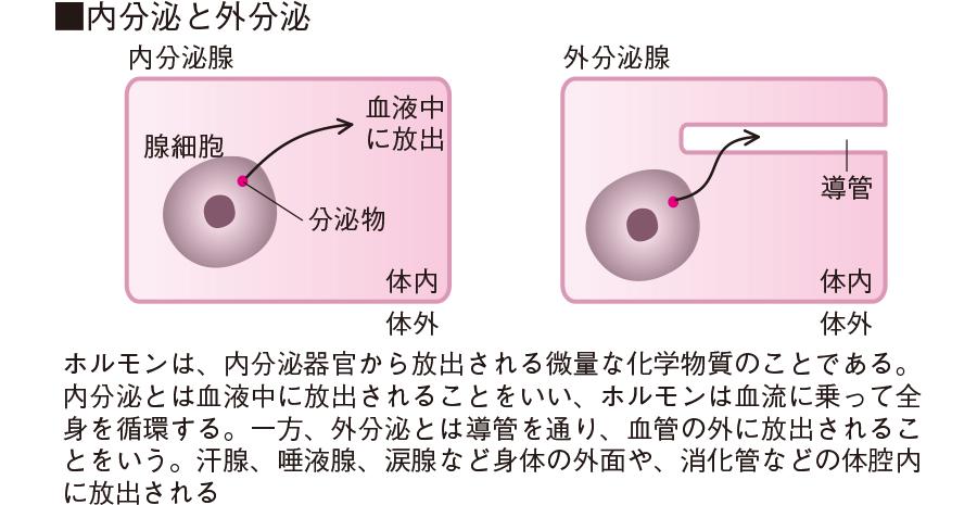 口絵:内分泌と外分泌