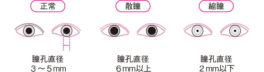 散瞳と縮瞳