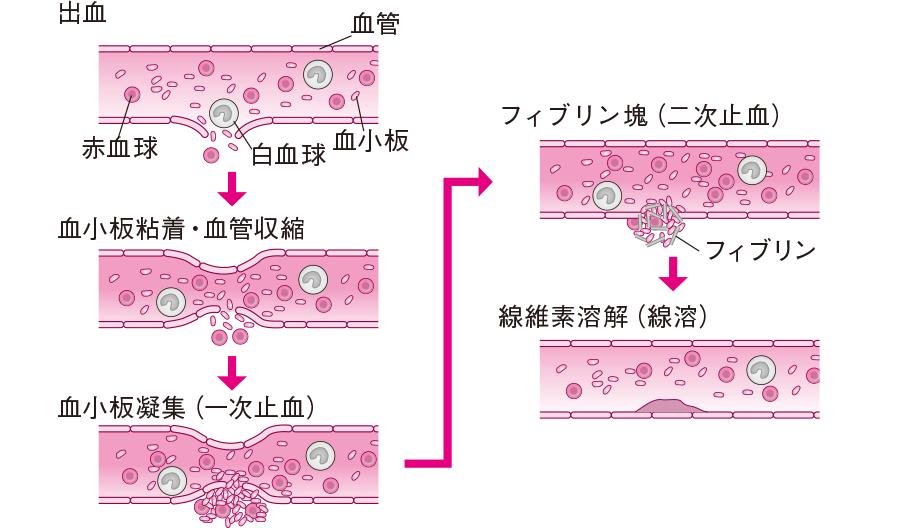 止血の機序